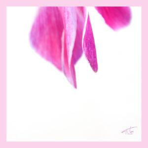 Anthi-irresistible pink floral scarf.Get it!