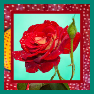 Ultra Feminine Red Red Rose Sensual Scarf, gift for her. BUY IT NOW.