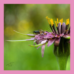 Tita Hellas-Women Silk scarf-Green & Pink flower