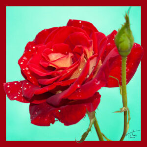 Tita Hellas-Red Rose Print on Silk, women fashion Silk scarf