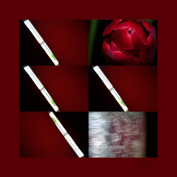 Red hot tulips silk scarf for elegant men & women.Buy it Now! St Valentine day gift!