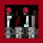 organic silk square scarf-red-tulips-70